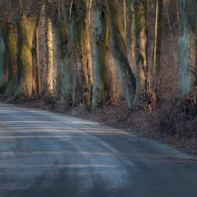 Aleja drzew o zachodzie, fotograf Paweł Litwin