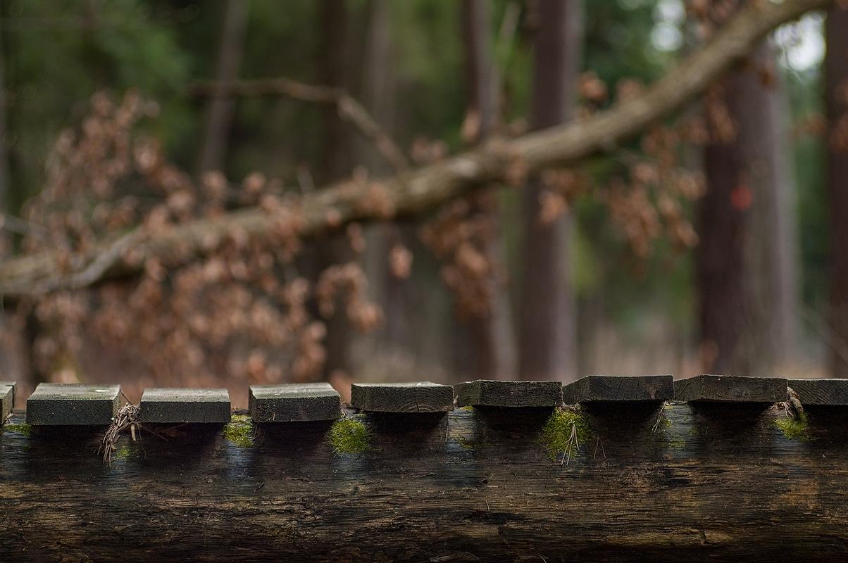 Mostek w lesie, fotograf Paweł Litwin