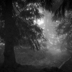 Las we mgle, Karkonosze, fotograf Paweł Litwin